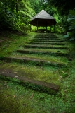 A escadaria verde | The green staircase